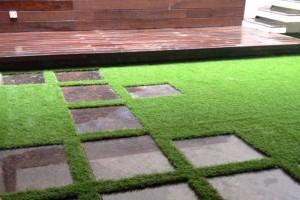 grass6